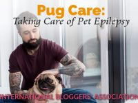 "man petting pug with text overlay ""Pug Care: Taking Care of Pet Epilepsy"""